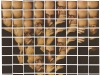 New York Chuck Close